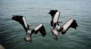 Iniciativa de monitoreo en la Reserva de Paracas para cuidar su diversidad biológica
